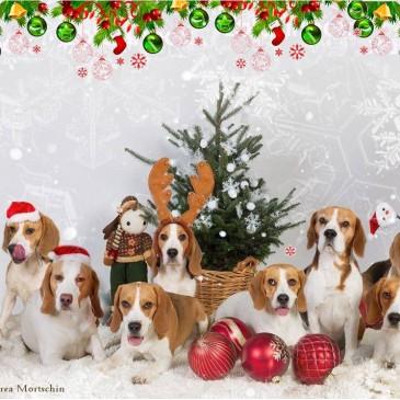 Frohe Weihnachten und ein gesundes neues Jahr!!