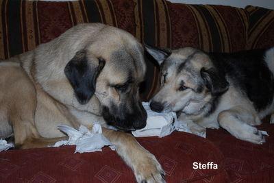 STEFFA hat einen tollen großen Freund zum Blödsinn machen!