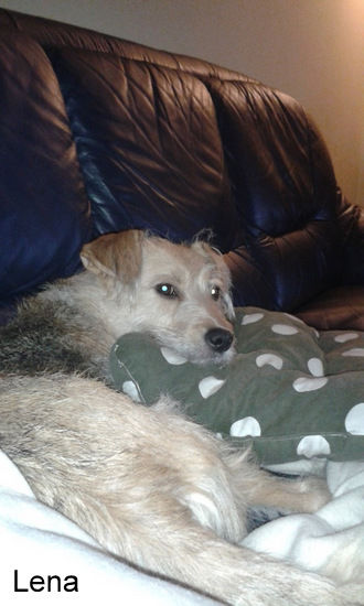 Unser Angsthund LENA, in die wie so viel Zeit und Liebe investiert haben. Mit einem super Ergebnis: Lena wohnt nun in Schöneiche und lässt es sich gut gehen!