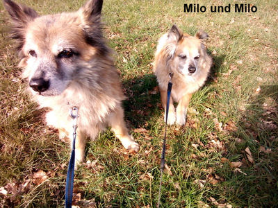 Für unser ältestes Sorgenfell MILO ist ein Traum in Erfüllung gegangen: Er hat sein Zuhause gefunden- bei einem Zwilling wie es scheint, mit gleichem Namen!