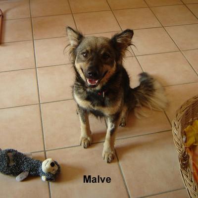 Malva wohnt in Biesdorf- Süd!