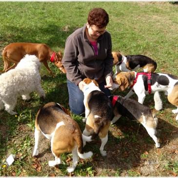 Hundetreffen 2015
