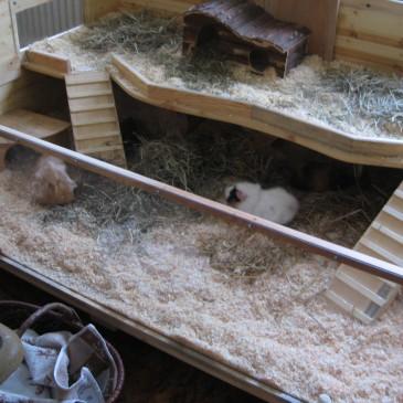 Idee für eine Meerschweinchenburg zum Nachbau