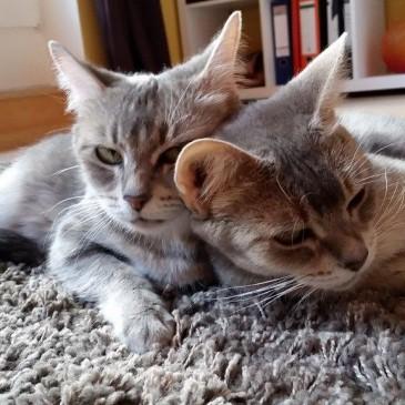 Blue und Moon jetzt Celie und Netty endlich im neuen zu Hause