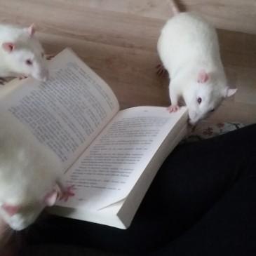Glückliche Rattenjungs im neuen Zuhause