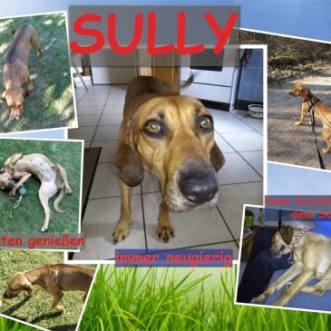 Laborhund Sully im neuen Zuhause