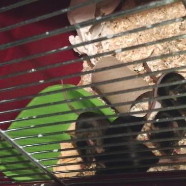 4 Mäusedamen im neuen Zuhause