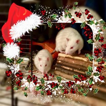 Weihnachten mit den Jungs