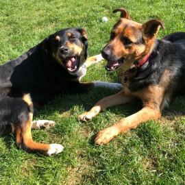 Heidi und Mica zusammen im neuen Zuhause