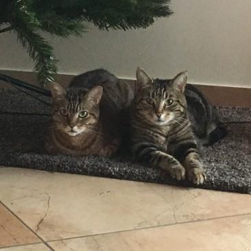 Laborkatzen Jule & Nele